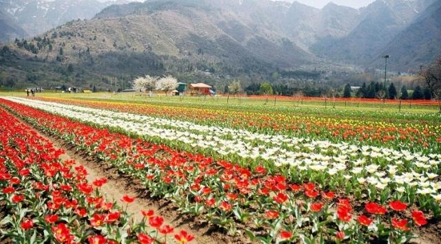 srinagar garden
